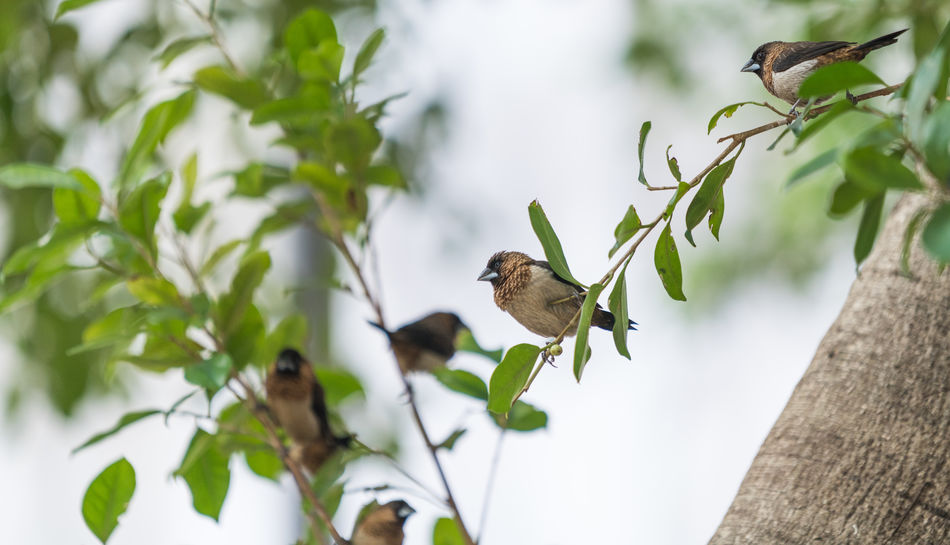 Small Birds in Hong Kong Bird Photography Hong Kong Animal Themes Animal Wildlife Animals In The Wild Beauty In Nature Bird Birds Birds_collection Branch Close-up Day Focus On Foreground Freshness Growth Insect Leaf Nature No People Outdoors Perching Plant Sparrow Tree
