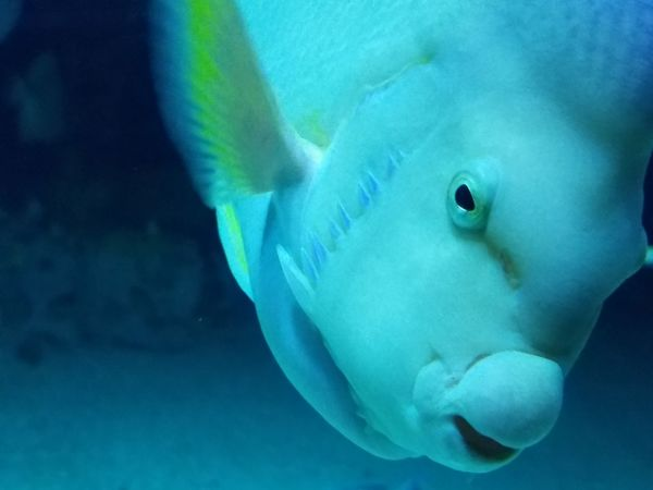 Underwater UnderSea Sea Life One Animal Animal Wildlife Sea Swimming Animal Fish Water Animal Themes Blue Close-up No People Beauty In Nature