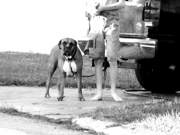 Animal Themes Dog Monochrome Photography Outdoors Pets Blackandwhite Light And Shadow The Future Is Now Everyday People Everyday Lives Candid Child Kid And Dog Faceless Unrecognizable Person Untold Stories Enjoying Life Streetphotography Random Acts Of Photography Front Yard Mansbestfriend Lifestyles EyeEm Animal Lover Childhood Florida