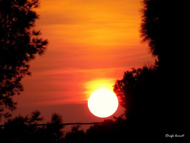 Sunset amongst pine trees, Muchavista, El Campello, Spain EyeEm Nature Lover EyeEm Best Shots Landscape Nature