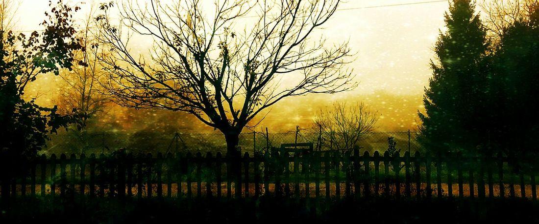 Beautiful Nature Italy Tuscany Ghivizzano Art Mixedmedia Trees
