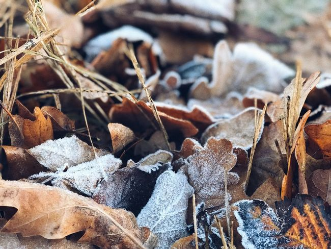 Full Frame No People Backgrounds Close-up Nature Day Beauty In Nature Cold Temperature Brown Pattern Focus On Foreground Fragility Vulnerability  Plant Outdoors Land Dry Winter Sunlight Abundance