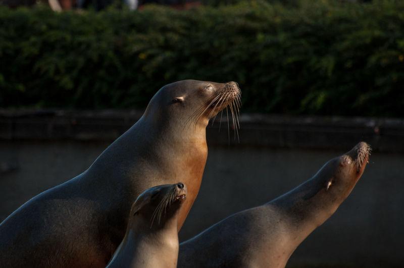 Seals at beach