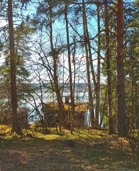 House In The Forest House By The Water Sunny Day Blue Sky Blue Water Blue Sky Green Nature Trees Quiet Places Lovely Weather