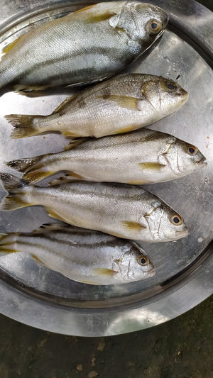 High angle view of fish for sale in market