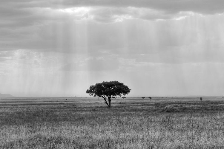 Endless Plains Serengeti EyeEm Nature Lover EyeEmNewHere Travel Travel Destinations Tree Rural Scene Storm Cloud Field Sky Grass Landscape Cloud - Sky Single Tree Overcast