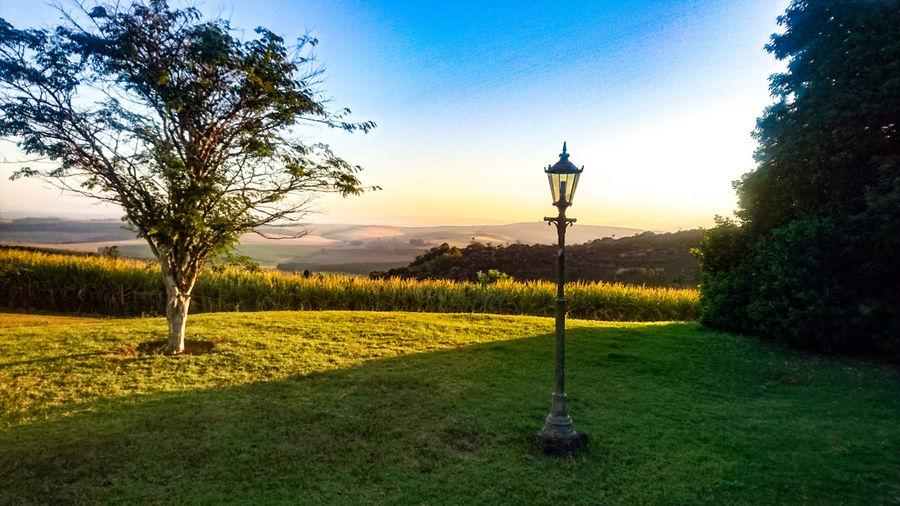 Sugar Cane Sunset Sunset Nature Photography Natural Beauty Peaceful Twilight Sugar Cane EyeEmNewHere