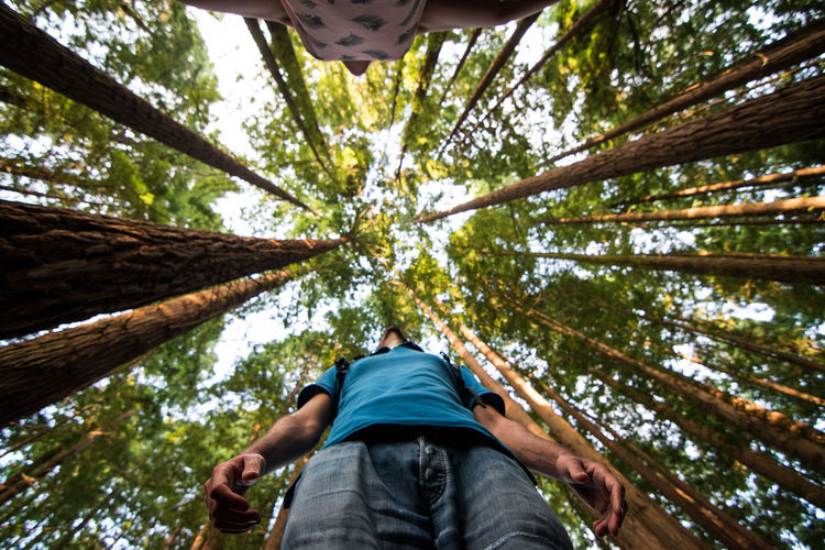 Selfie redwoods in the sequoia forest of cantabria