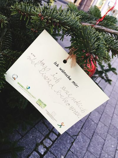 feel ya Wish Tree Christmas Tree Wish Text Western Script Communication Handwriting  Message Paper High Angle View Christmas Close-up Reminder