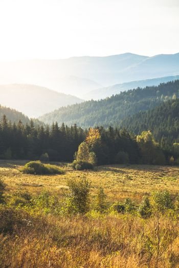 Landscape Autumn End Of Summer Mountain Mountains Gold Check This Out Enjoying Life Taking Photos Relaxing Sunrise EyeEm Beautiful Day Travel OpenEdit Landscape_photography Open Edit First Eyeem Photo Eye4photography  Landscape_Collection EyeEm Best Shots EyeEm Best Edits EyeEm Gallery EyeEm Best Edit Hike