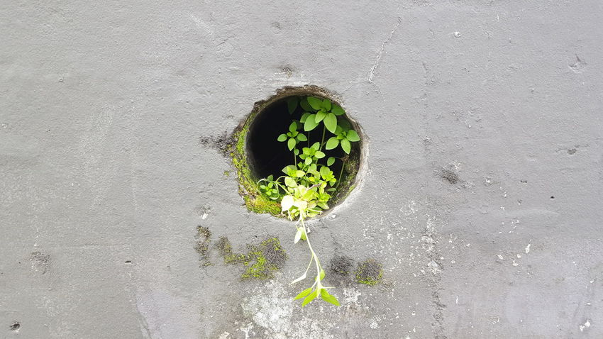 Natureinthecity Naturewins No People Close-up Green Color Nature Outdoors Day Freshness Wall Circle Circleoflife Plant Greenery City City Life Cityscape City View
