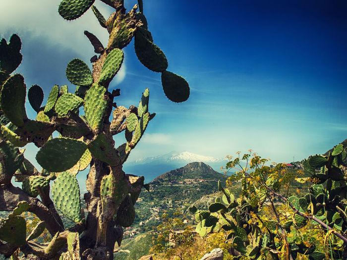 Blue Sky Cactus Etna, Mountain, Sicily, Landscape Landscape_photography Sicily Sky And Clouds Taormina And Etna