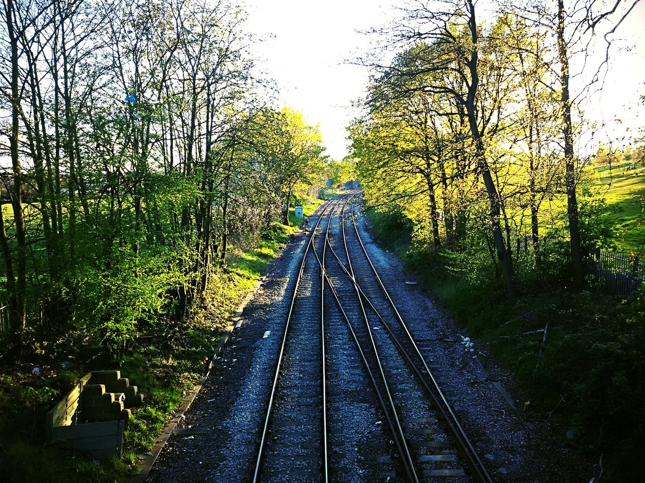 railroad track, rail transportation, tree, transportation, the way forward, public transportation, day, nature, growth, outdoors, no people, beauty in nature, sky