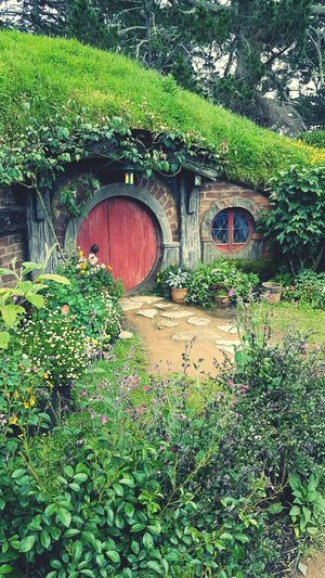 House of hobbit TheHobbit Newzealand Newzealandphotography Newzealandnatural Newzealandgreen Nature Holiday Ilovenewzealand Forsale Growth Green Color Plant Tree No People Outdoors Day Nature Built Structure Architecture