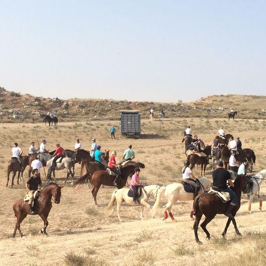 Transhumancia en Fuentes 2014 Horse Cows Transhumancia SPAIN