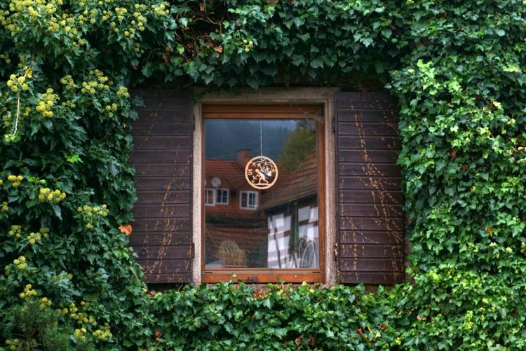 Framed window Plant Door Outdoors Architecture Day No People Built Structure Wood - Material Building Exterior Tree Nature Frame Framed Window Mirror Reflection Architecture Green Green Color Leaves Autumn Architectural Detail Travel Destinations Plant