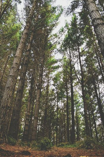 Nature Forest New Zealand Natural Check This Out