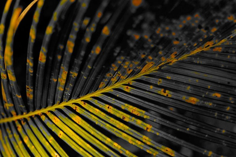 Full frame of palm leaves