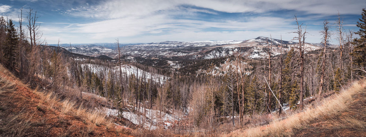 Winter in Utah Dixie Panorama USA Utah Beauty In Nature Cloud - Sky Cold Temperature Day Environment Landscape Mountain Mountain Range Nature Outdoors Plant Scenics - Nature Sky Snow Snowcapped Mountain Tree Winter