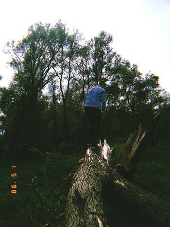 Tree Water Sky Grass