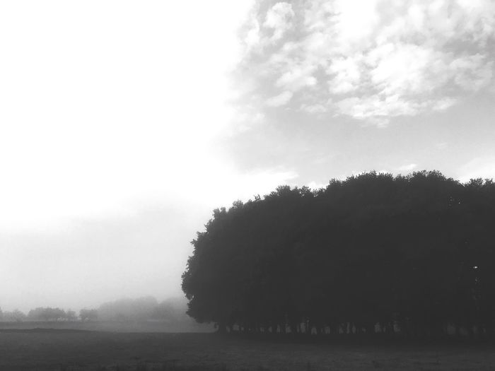 Tree Nature Landscape Outdoors Fog Beauty In Nature Tranquility Sky Field Travel Inspire Agriculture