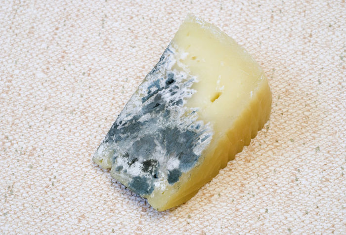 cheese block with storage mould Decay Cheese Cheese Block Close-up Expired Food Food Food And Drink Fungi Indoors  Inedible Mould Mouldy Mycelium No People Rotting Unpleasant