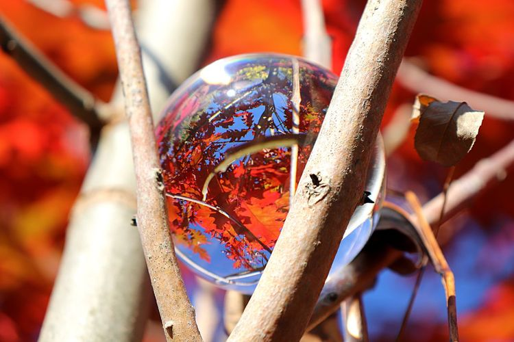 Autumn colors Autumn Leaves Lensball Photography Lensball EyeEm Selects No People Close-up Focus On Foreground Day Celebration Outdoors Sphere Still Life Selective Focus Red