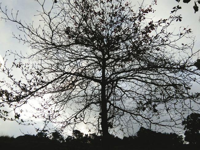 Beautiful Tree Nature Beautifulinnature Naturalbeauty Photography Landscape