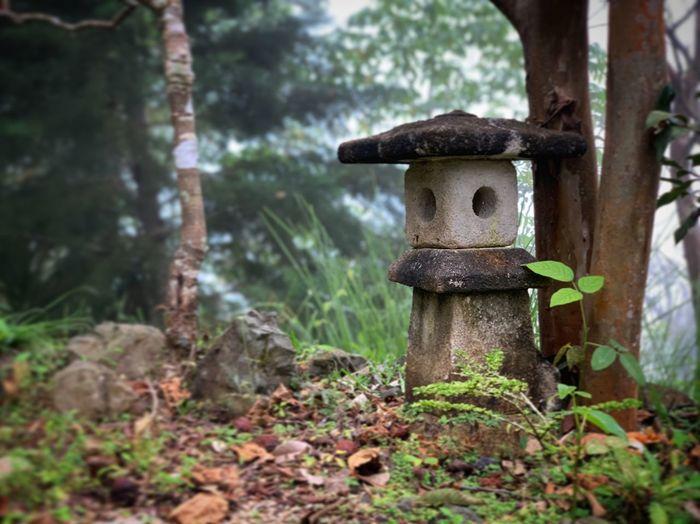 Mistery Zen