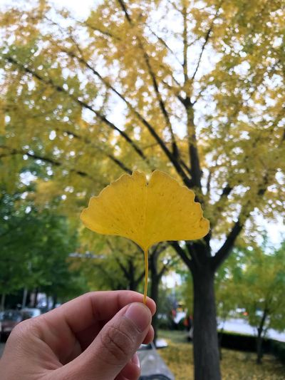 Close-up of hand holding yellow leaf