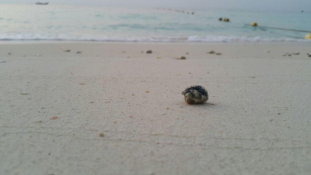 Koh Rok Beach Animal Love Hermit Crab Animal Photography Thailand Relax Time  Hello World Life Is A Beach