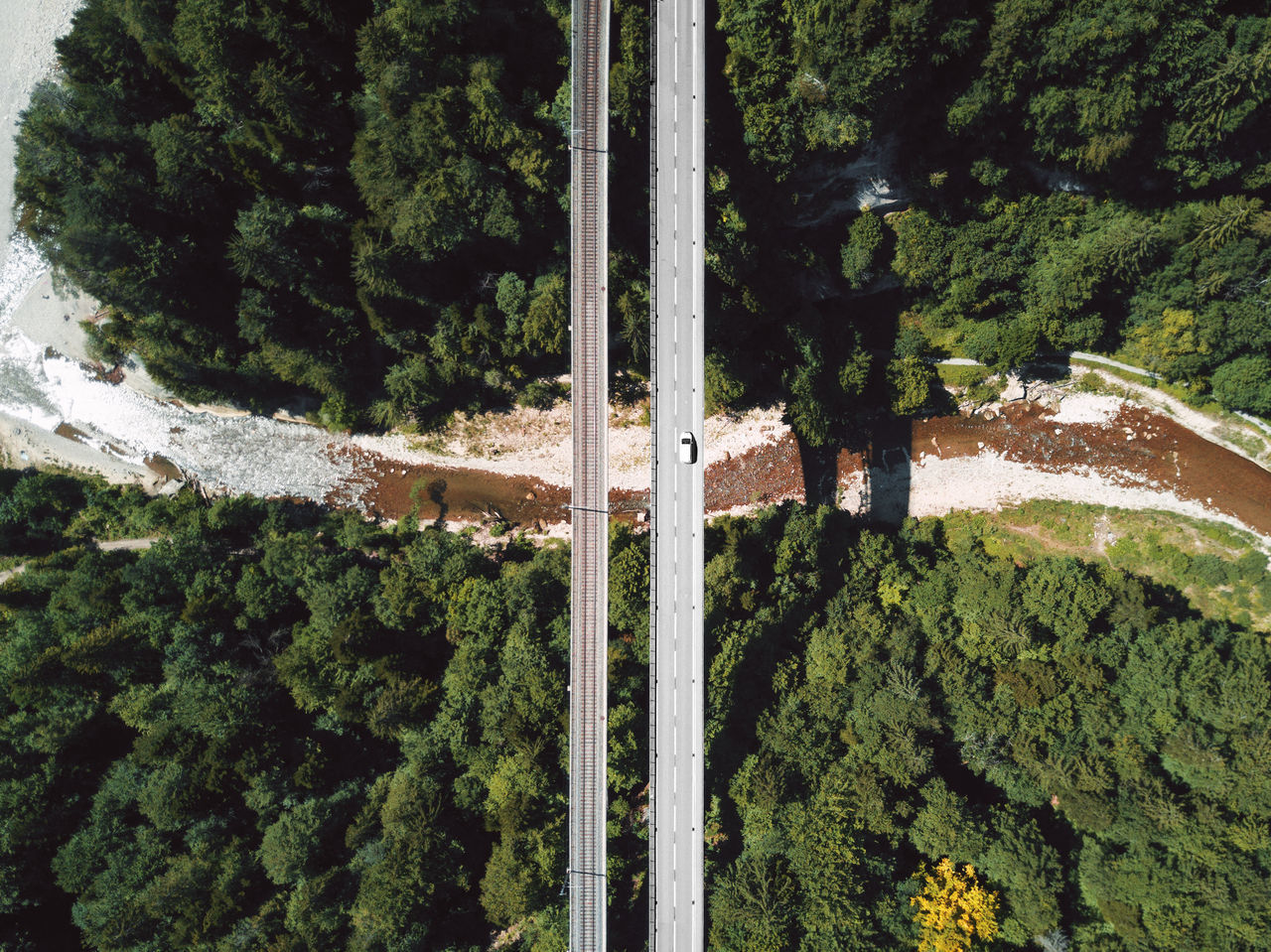 Aerial view of bridges over trees at forest
