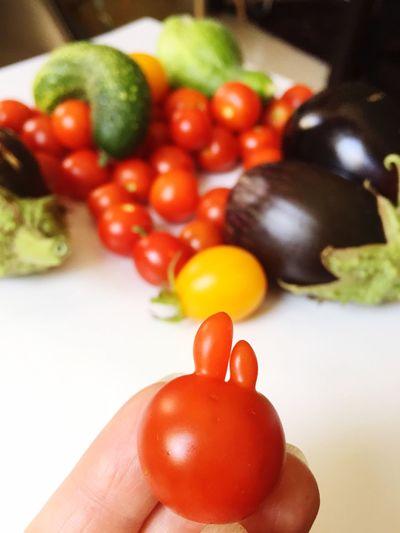 Tomato Human