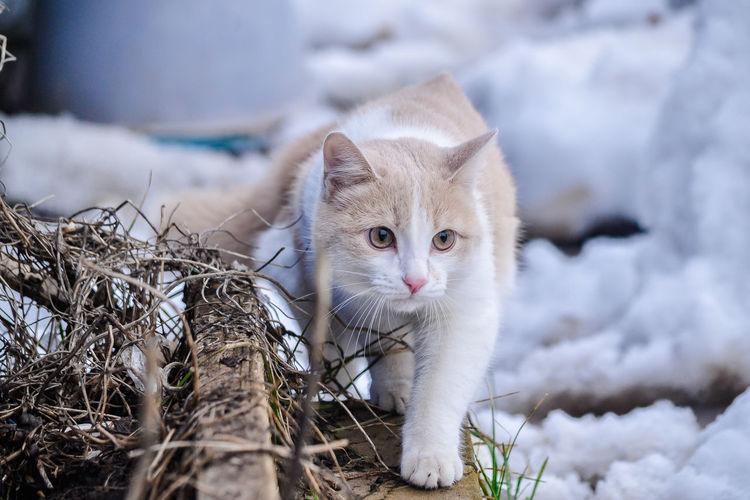 CatPersey Tatarstan Cat Winter Russia RussianCat Russianwinter Village