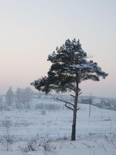 Россия! Winter Tree Russia