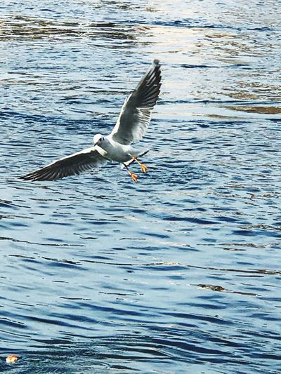 Gull time at