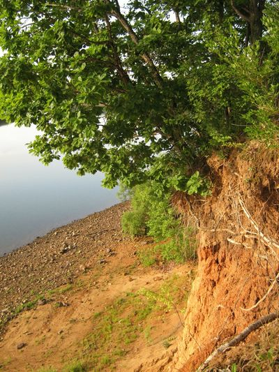 Ussuri river River Water Tree Nature Oak Tree Summer Day Morning Light Beauty In Nature No People Outdoors Growth Sky Pebble Sand Riverbank River View Landscape Cliff River Cliff Morning Far East Ussuri