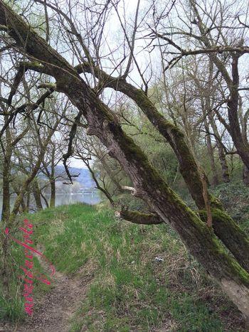 am Hochrhein-Natur pur. 💕💗 Monique52 Hochrhein Südschwarzwald Rhein Enjoying Life Natur Waldspaziergang