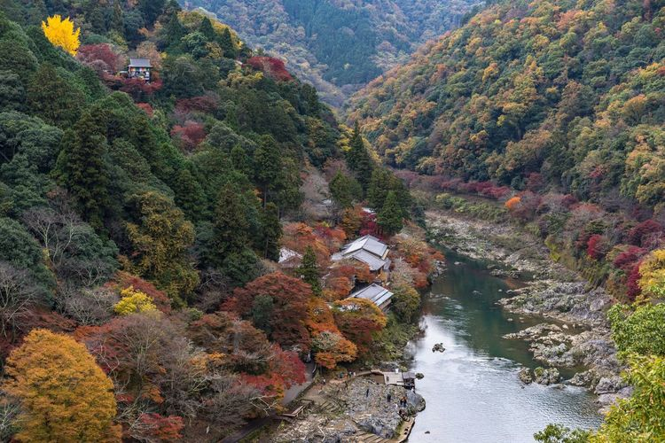 Autumn in Arashiyama Tree Nature Beauty In Nature Outdoors Water Scenics No People Day Kyoto Japan Japan Photography Momiji Travel Destinations Autumn Landscape Colorful River River View Riverside