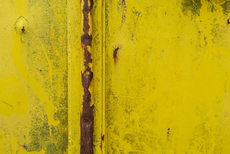 High angle view of a lizard on yellow wall