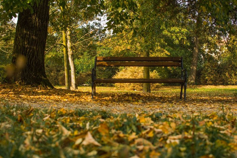 Autumn colors Leaves Tree Plant Bench Autumn Seat Park Autumn Mood Leaf Nature Tranquility Park Bench Plant Part No People Tranquil Scene Beauty In Nature