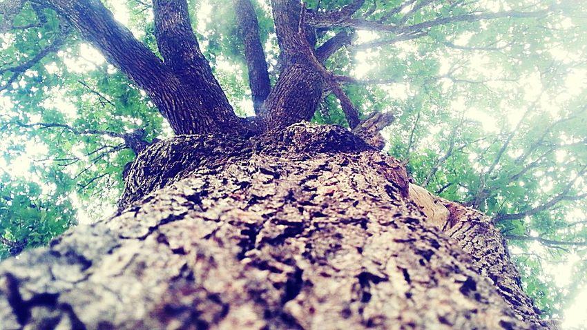 Trees Nature Nature Beauty Shinning Bright Shine Through Sunshine