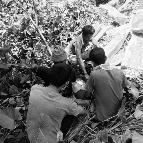 Work Hutan Kerja Pohon