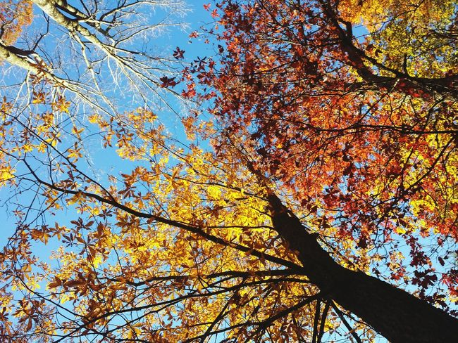 Showcase: November Colors Of Autumn Blue Sky Skies Colors Of The Sky Beautiful Day Beautiful Sky Nature's Diversities The Great Outdoors - 2016 EyeEm Awards Home Is Where The Art Is My Year My View