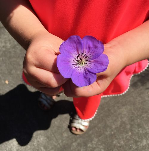 Fresh picked for her mom Flower Kidsgetit Children Hands Explore Nature EyeEmNewHere