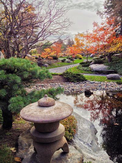 IPS2015Fall fall, colors, fall colors, Japanese garden