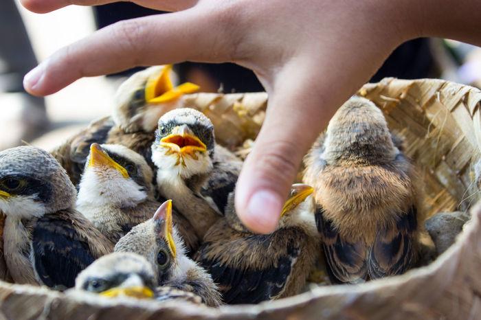 Bird Nests Bird Bird Market Bird Nest Closeup Bird Nesting Box. Domestic Animals Human Hand Young Bird Young Birds