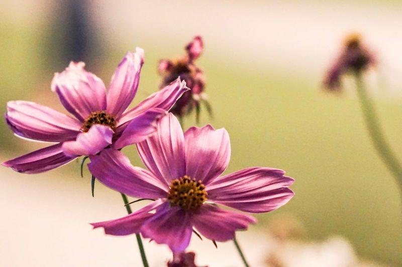 Ma' flower 🌸
