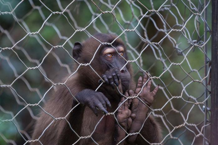 Animal Themes Animal Wildlife Animals In The Wild Ape Baboon Chimpanzee Close-up Day Gorilla Looking At Camera Mammal Monkey No People One Animal Orangutan Outdoors Portrait Primate Zoo