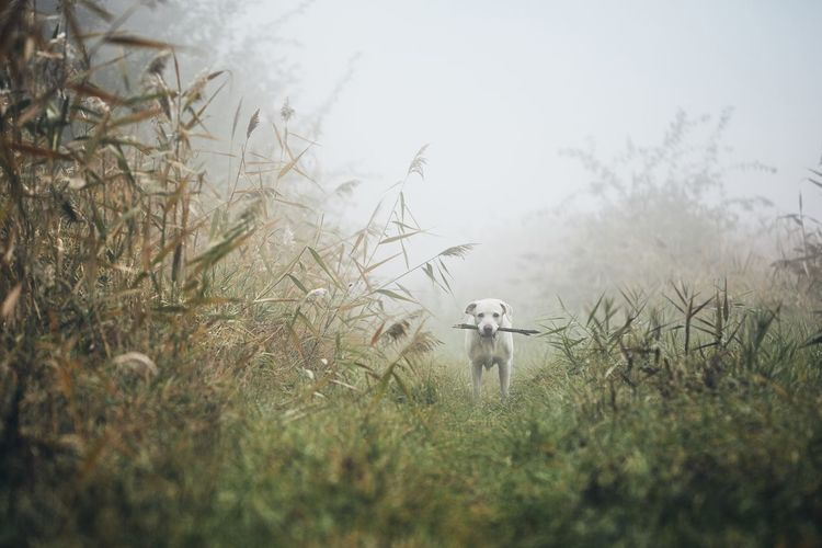 Dog standing on field during foggy weather